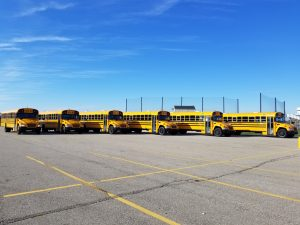 Fleet of new busses lined up